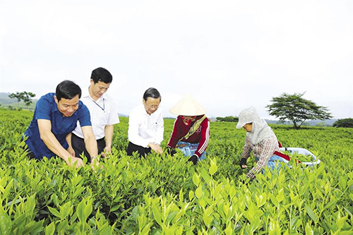 Đồng chí Nguyễn Quốc Lập- Bí thư Huyện ủy (giữa) cùng đoàn công tác Huyện ủy huyện Hương Sơn thăm cánh đồng chè trồng theo quy trình Viet gap của người lao động tại xã Sơn Kim 2. Ảnh: Văn Lê